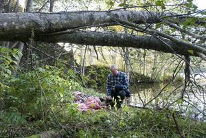 Baggböle 8 oktober: Det konstateras att det är en varg som har dödat flera får.