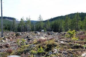 Det finns kungsörn i det område där den planerade vindkraftsparken Hälsingeskogen ska ligga. Det hävdar nu kungsörnsgruppen i Gävleborgs län.