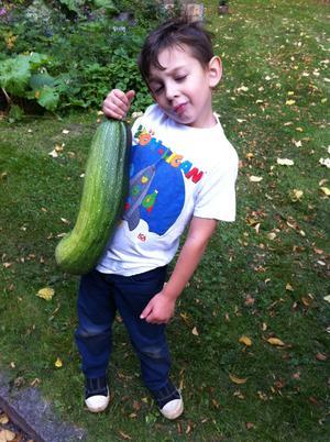 Fabian med en av våra gurkor vi odlat på gården