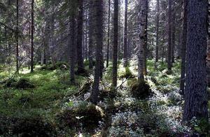 Genom ett EU-projekt har 27 skogsområden med natur- och kulturvärden kunnat skyddas i länets kustområden.