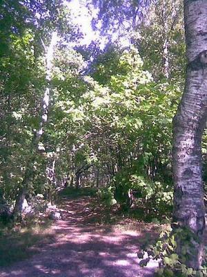 Bakom Svarvargatan finns en vacker skogsdunge som jag ofta promenerar i. Det känns lite som att vara ute i naturen. Våren är speciell, då vaknar den här skogsdungen till liv och det kvittras hej vilt. Vi skall vara rädda om dessa underbara skogspartier i vår stad.
