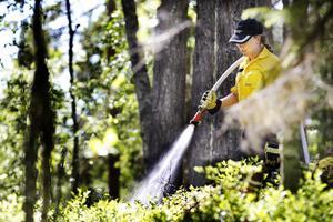 Ida Svartholm, naturvårdshandläggare, bevattnar avgränsningen av brandområdet.