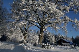 Vilket vackert vinterlandskap som visade upp sig utmed vägen mellan Ågrena och Hasselfors.