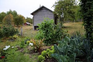 Odlade ytor och hagmark.