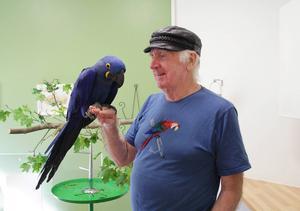 Jan-Åke här med sin Hyacintara Grim, som är en av de svåraste fåglarna att föda upp.