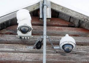 Genom de här webbkamerorna kan folk från hela världen följa Sune Häggmarks 13 älgar.