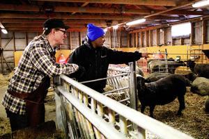 Stefan Johansson, kökschef, och Berhe Weldekidan, fårskötare, kollar efter vilket får som ska föda härnäst.