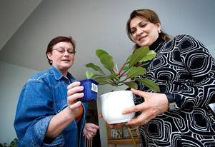 Ökenstjärna. Ayten Tutay, till höger, hade turen att få ett skott av sprätt i väg eller ökenstjärna som den egentligen heter. Med på bilden är också Anita Andersson.