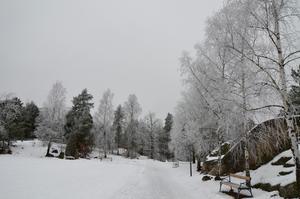 Efter en fuktig natt var träden riktigt vackra med mängder med frost.