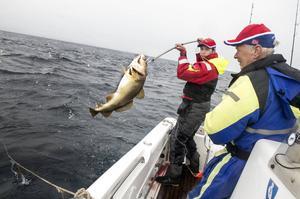 Magnus krokar en torsk som Jan-Arne lyckats fånga.