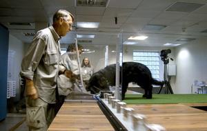 UPP TILL BEVIS. Under träningsfasen vet hundförarna vilka prov som innehåller cancer. Varje gång hunden Ingo lägger nosen i rätt burk får han godis från Lars-Erik Ejdebäck.