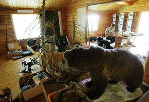 Inget är sig likt verkar björnen fundera där han står i stugan. Det är full aktivitet med hantverkare som bygger, röjer, drar kablar och möblerar om. Nästa helg invigs informationsstugan.