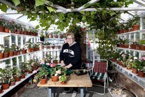 Pelargonvän. Anna Gustafsson med en del av sin stora samling pelagoner, som snart ska få vintervila. Foto: Per G Norén