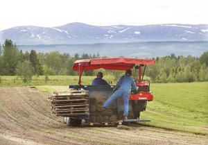 Det är ingen dålig utsikt som Thomas Hansson och Håkan Antonsson har när de tar upp sina gräsmattor. Den här gräsytan är på 20.000 kvadratmeter är just färdig för att skördas.