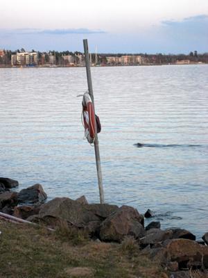 Strax bakom livbojen syns den simmande bävern.