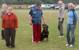 Lydig. Rottweilern Marco sattes på prov, här bedömer domaren hur han reagerar när en grupp människor går runt honom. Foto:Maja Berg