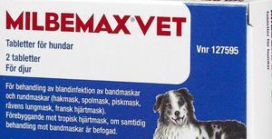 avmaskningsmedel mot lungmask katt
