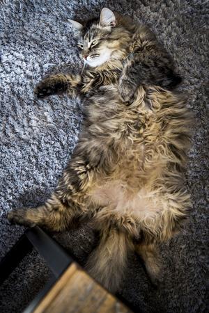 Katten Lasse trivs i tvåan i Bromma.