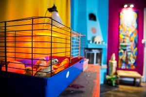 I vardagsrummet har Annika värmelampan till de nykläckta Hedemorakycklingarna.