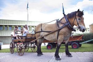 De flesta ekipagen bestod av ryttare i sadel men det fanns även plats för häst och vagn.