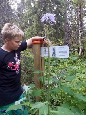 Anton Molund testar på en av de nya vandringslederna i Ansättfjällen.