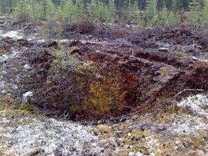 Holmen skog råkade skada en oupptäckt fångstgrop vid markberedning. Foto: Holmen skog