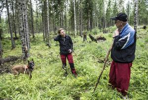 På Lars-Göran Stridhs skogsskifte i Västerböle, söder om Matfors jobbar hunden Aska och matte Annette Johansson.