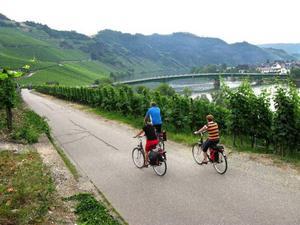 Största delen av sträckan går på separata cykelvägar längs Mosels sluttningar, som överallt är bevuxna av vinplantor. Foto: gunnar westergren