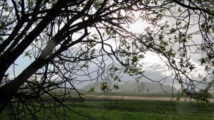 Ljumt regn en kväll i maj
