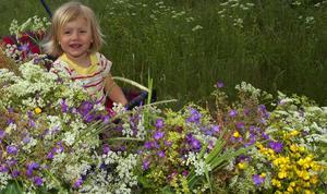 Blomsterhav. Alva Thom och övriga barn var duktiga på att få ihop rena blomsterhavet.