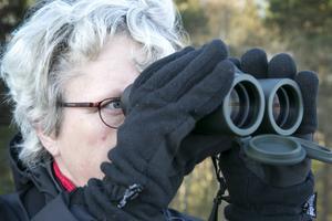Ylva Hammarlund försöker få syn på den bruna kärrhöken.