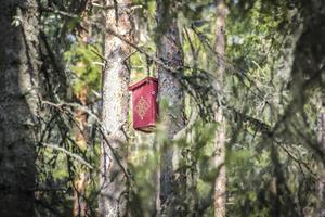 Kring tjärnen har färgglada fågelholkar satts upp.