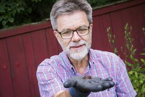 Erik Björk i Söderhamn hittar upp emot 250 stycken mördarsniglar i trädgården varje kväll.
