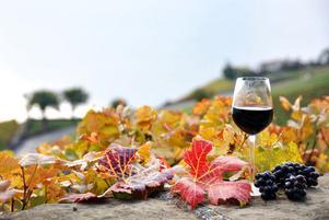 Sommarvinerna får lämna plats för höstens nyheter på vinhyllorna.