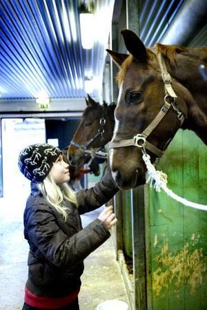STORLEKSSKILLNAD. Cornelia Wikstrand har hand om hästen Truxen och får inga problem med att borsta honom under magen.