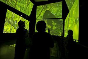 På Panamas nya museum kan man uppleva känslan av regnskogen via tolv storbildsskärmar.