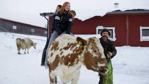 Med två oxar och en del, våga bjuda på sig själv, har systrarna Pålsson fått uppmärksamhet från tusentals. Från vänster,Britt, Liw och Ann, oxen Qarl Gustav och regissören pappa Svante.