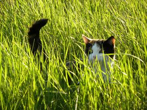 Mirma är på upptäktsfärd i sommarens första höga gräs.