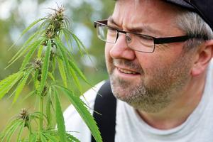 Peder Persson i Hede inspekterar den cannabisplanta som växt upp på hans tomt