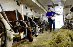 Även om bondeyrket innebär fasta tider då korna ska mjölkas är arbetet väldigt fritt, tycker Åse Bixo. – Det går att lägga upp dagen precis som man vill. Vad som helst kan hända, det blir aldrig tråkig slentrian, säger hon.