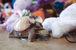 Sköldpaddan fick stå kvar i Remmen.