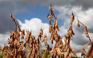 Välj mat från ekologiska odlingar, uppmanar Per-Olof Erickson.