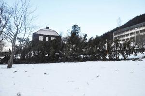 Den ståtliga julgranen nedanför Årekompaniet föll offer för Ivar.