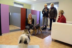 Emily Larsson tillsammans med Chris Munters Josefsson, Siv Thunberg och Kristina Larsson och hundarna Alfons, Robbin och Morris.
