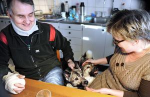 Gråhundarna Tuva och Tilly vill inget hellre än att jaga älg. Per Hedberg och Gunilla Löfstrand är mer tveksamma, efter det som hänt.