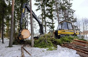 I Norrland finns gott om naturresurser. Träd fälls, kvistas och kapas i rätt längder med ett rasande tempo med en skördare.