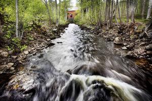 Det kommer att ta tid att få lekande fisk att vandra uppströms Nianån som föreslås bli nytt naturreservat.