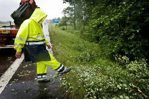 Niklas Östlund for kors och tvärs för att få bort träd från vägarna.