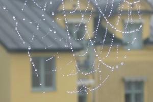Vattendroppar som bildade ett vackert mönster i spindelens nät en regning dag.