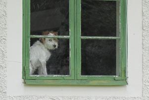 ..och i fönstret satt en hund!
